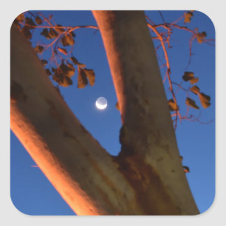 WAXING MOON AND GUM TREE QUEENSLAND AUSTRALIA SQUARE STICKER