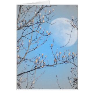 Waxing Moon Through Tulip Poplar Tree Card
