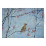 Waxwing 2013 oil on canvas card