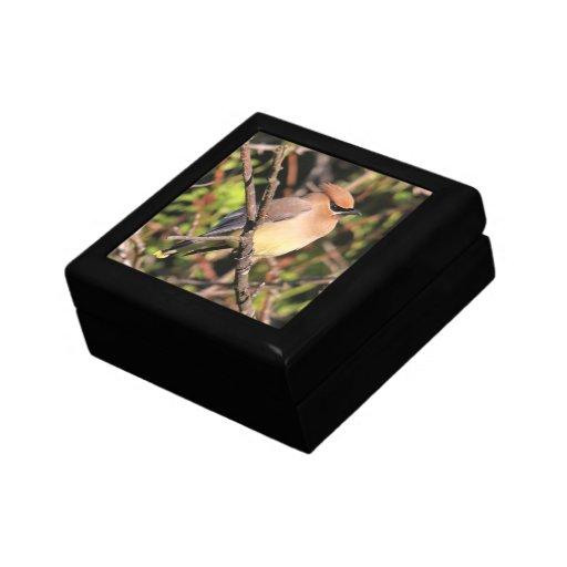 Waxwing de cedro cajas de recuerdo
