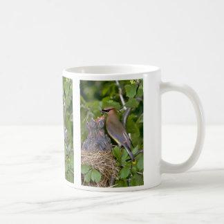 Waxwing de cedro con los polluelos taza de café