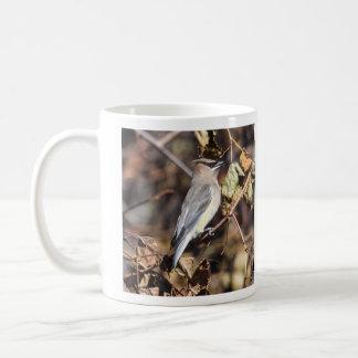 Waxwing de cedro taza de café