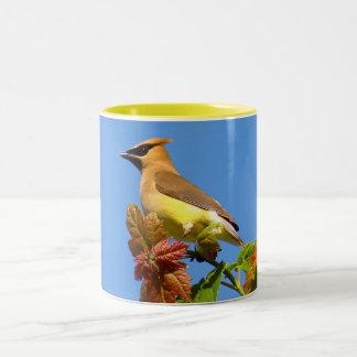 Waxwing de cedro taza de café de dos colores
