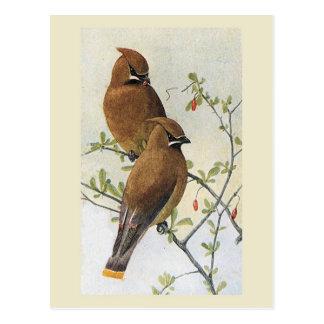 Waxwing del pájaro 01 del vintage postal