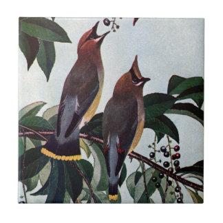 Waxwings de cedro en un cerezo negro salvaje azulejo cuadrado pequeño