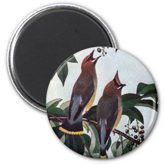 Waxwings de cedro en un cerezo negro salvaje imán redondo 5 cm