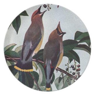 Waxwings de cedro en un cerezo negro salvaje plato para fiesta