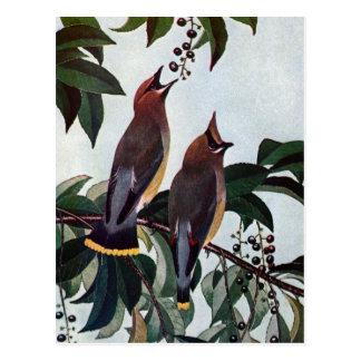 Waxwings de cedro en un cerezo negro salvaje postales