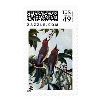 Waxwings de cedro en un cerezo negro salvaje sellos