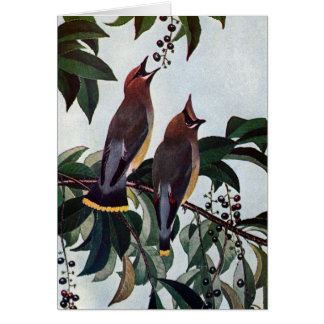 Waxwings de cedro en un cerezo negro salvaje tarjeta de felicitación