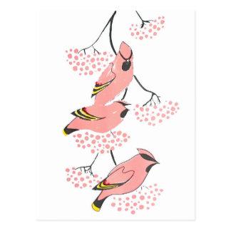 Waxwings rosados en bayas rosadas tarjeta postal