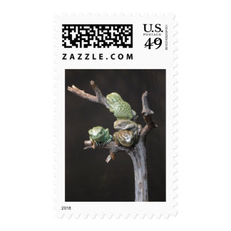 Waxy monkey frogs stamps