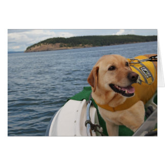Waylon At Work Conservation Canines Labrador Card