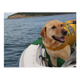 Waylon at Work Conservation Canines Orca Scat Team Post Card