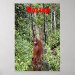 Wazzup divertido con el orangután de Krista Impresiones