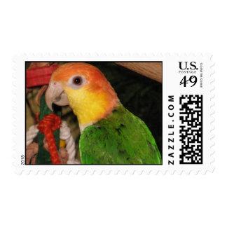 WBC Stamp