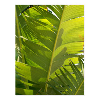WC Banana Leaves Postcard