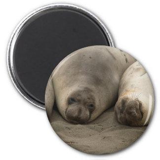 We 3 Seals 2 Inch Round Magnet