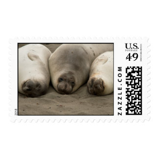We 3 Seals Postage