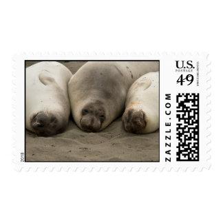 We 3 Seals Stamps