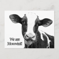 We are Moving! Moooving Change of Address Cow Announcement Postcard