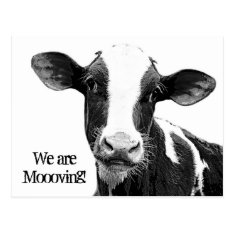 We Are Moving! Moooving Change Of Address Cow Postcard at Zazzle