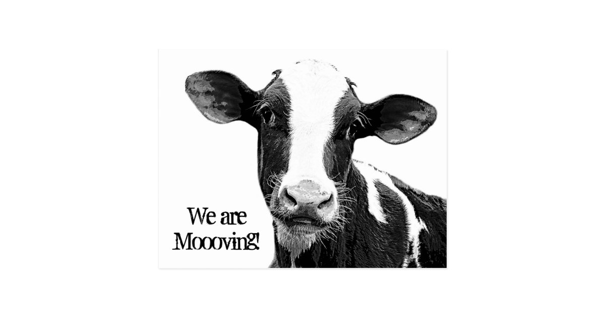 We Are Moving Moooving Change Of Address Cow Postcard