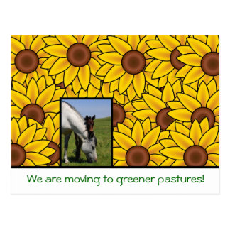 We are moving with horse & sunflowers New address Postcard