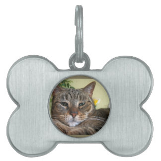 We Are Not Amused Pet Tags