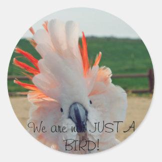 We are not JUST A BIRD! Sticker
