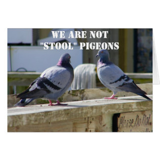 WE ARE NOT STOOL PIGEONS CARD