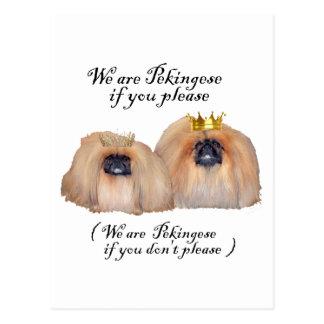 We are Pekingese Postcard