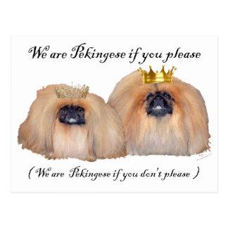 We are Pekingese Post Card