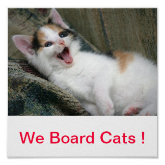We Board Cats Sign Kittens Kitty Poster