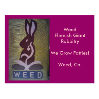 We Grow Fatties! Postcard
