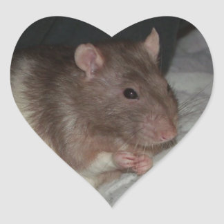 we love Kryton the rat stickers