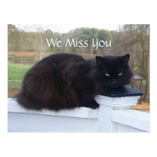 We Miss You Kitty Postcard