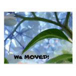 We Moved postcards Moving announcement