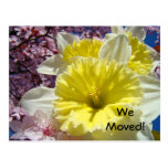 We Moved! postcards New Address Spring Daffodils