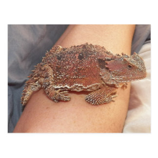We named the horned toad: Ho'Dee Towd...Kathy(AH) Postcard