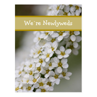 We`re Newlyweds Spiraea Postcard