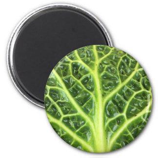 We singing Kohl Savoy cabbage berza chou vert Magnet