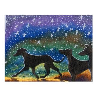 We three greyhound dogs postcard