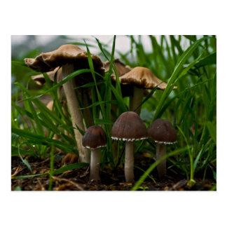 We Three Mushrooms 3 Postcard