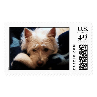 Weary Westie Stamp