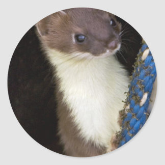 Weasel, Short-tailed Classic Round Sticker