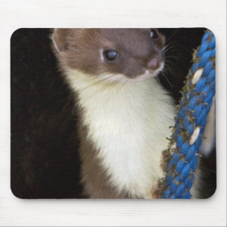 Weasel, Short-tailed Mousepad