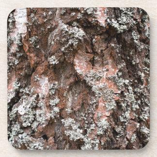 Weathered birch bark coaster