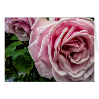 Weathered Pink Rose Blank Note Card