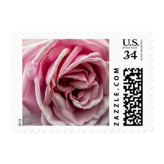 Weathered Pink Rose Stamps